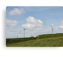 Cow in a Field Canvas Print