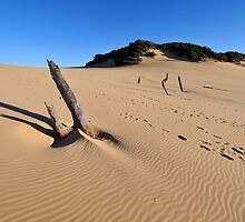 Carlo Sandblow. Rainbow Beach, Queensland, Australia (4) by Ralph de Zilva