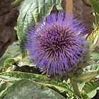 Thistle by biddumy
