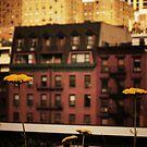 High Line Park Wild Flowers by Vivienne Gucwa