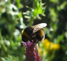 thistle bee by Babz Runcie