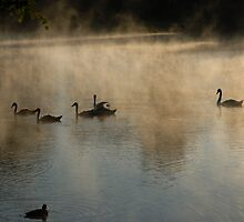 Swans, Lake and Fog by Antanas