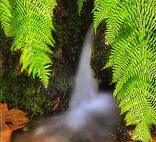 Fern Fantasy Waterfall by Floyd Hopper