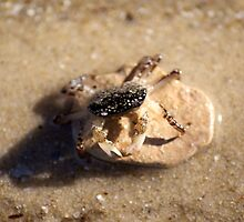 Little Crab Big Rock by DianaM