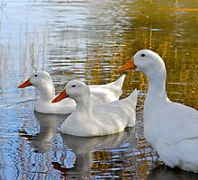 Three little ducks went out one day..... by Ali Brown
