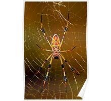 banana spider symmetry  Poster