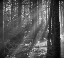 Roan Mountain Morning by C David Cook