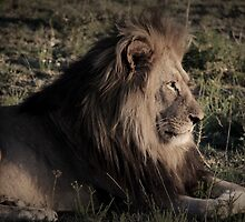 majestic king by Gavin Craig