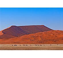 Life in the desert (II) Photographic Print