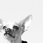 Chihuahua and the Pet Portrait Message by Corri Gryting Gutzman