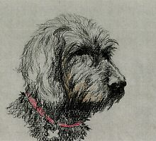 Ben the Labradoodle by juliecronin