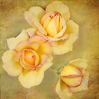 trio by Teresa Pople