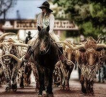 Cattle Drive in the Stockyards by BARBARA2B