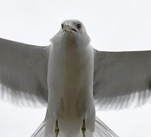Wing Span by Heather King