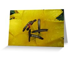 A Touch of Lemon - Lily Supermacro Greeting Card