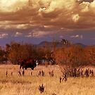 Open Range by Cyn  Valentine