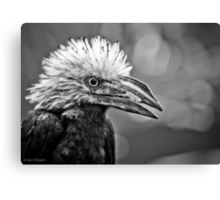 My arch nemesis- the white crested hornbill Canvas Print