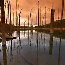 The Sticks - Wellington National Park- Collie WA by Chris Paddick
