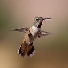 Hummingbird by Bryan Jolly