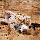 Dirt Bath by Lacey 'Tak' Ewald