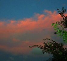 Sunset Leaves Cloud by Robert Phillips