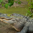 Alligator In Profile Sunning On Sandbar by BenSellars