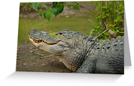 Alligator In Profile Sunning On Sandbar by BenSellars