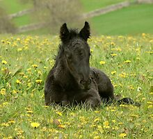 Peaceful foal at Littletree Stud by Fleur Hallam