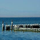 Salton Sea by Vicki Pelham
