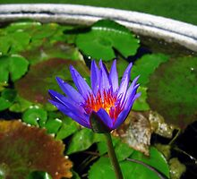 Purple by sstarlightss