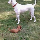 Bull matiff Miss Mac & Miss DAISY jack russell by Girards