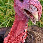 Mr. Turkey by Eileen Brymer