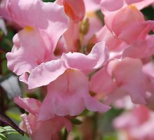 Snapdragons Antirrhinum by GeorgiaConroy