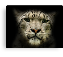 Snow Leopard (Uncia uncia or Panthera uncia) Canvas Print