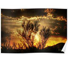 Sunset Bush Poster