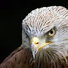 Redkite by Dale Batchelor