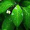 Raindrops/Waterdrops