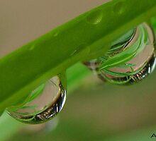 tears in garden by amar singh