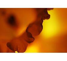 Daffodil Ripple Photographic Print
