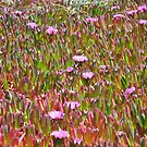 Monterey Succulent 3 by Polly Greathouse