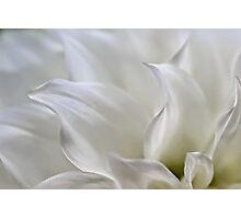 Ethereal dahlia Photographic Print