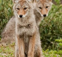 Curious Canine Siblings by Coniferous