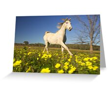 Horse galloping through a field of flowers Greeting Card