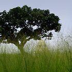 Tree by Shiju Sugunan