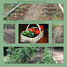 My Vegetable Garden, 2011 by DottieDees