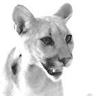 Mountain Lion at C.A.L.M. by Corri Gryting Gutzman