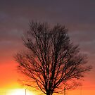 Tree Silhouette At Sunset... Free State, South Africa by Qnita