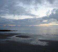 Flight of a seagull at sunset, Ballybunion, Ireland by jos2507