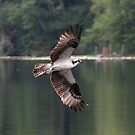 Osprey at Lake Tanwax by Dave Davis