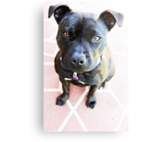 Milly Is My Name  Metal Print